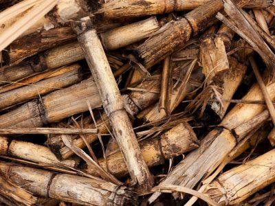 CROBIOM: 'Biomasu je potrebno jače uključiti u energetsku tranziciju'