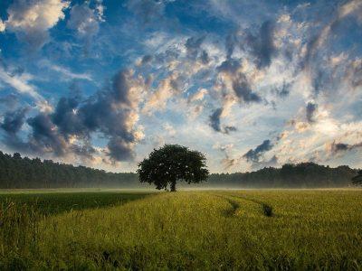 Strategija EU-a za bioraznolikost do 2030. godine – Vraćanje prirode u naše živote
