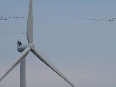 Nova studija: Ptice daleko bolje izbjegavaju lopatice turbina nego što se mislilo